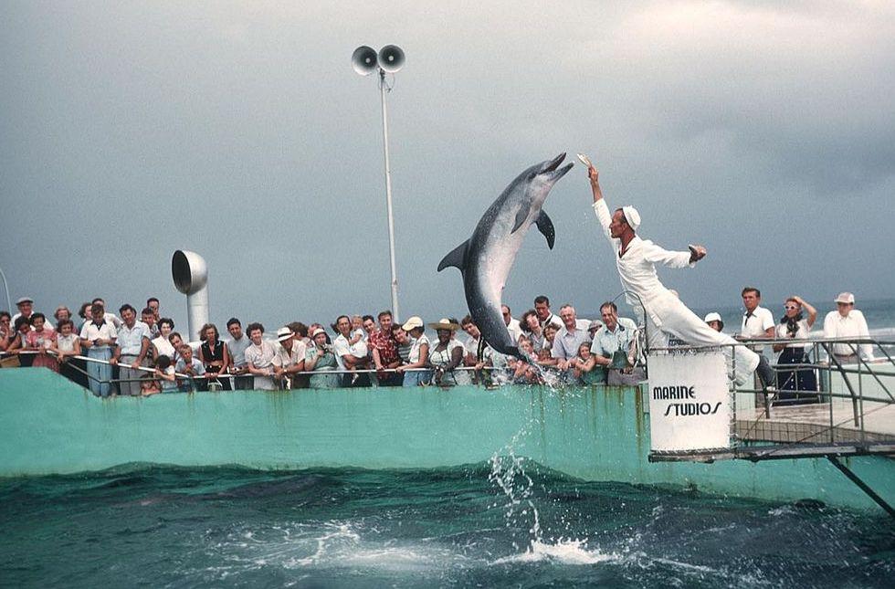 marine studios dolphin show