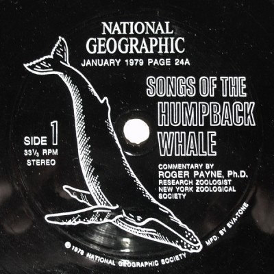 songs of the humpback whale flexidisc 1979